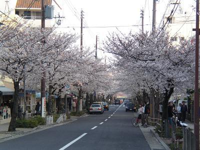 芦屋グルメ 焼肉 あづま様 桜並木.jpg