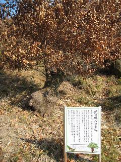 里山ハイキング04.jpg