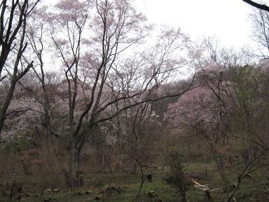 うまい!を明日へ 黒川桜5.JPG