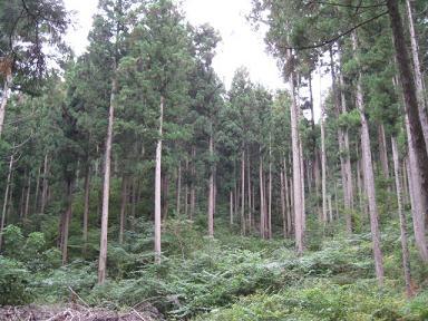 アサヒの森05.JPG