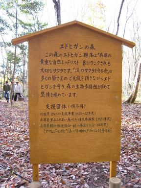 エドヒガンの森.JPG