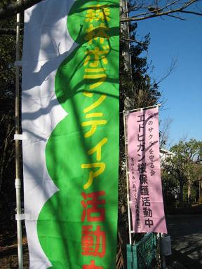 エドヒガン桜保護活動中.JPG