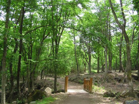 リクラシアの森.jpg
