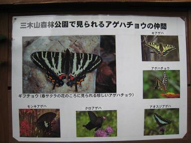 三木山公園 チョウチョウの種類.JPG