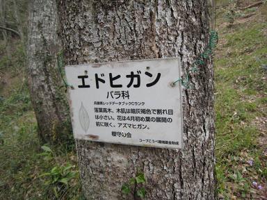 宝塚 桜の園4.JPG