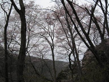 宝塚 桜の園5.JPG