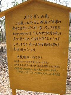 川西 サクラを守る会2.JPG