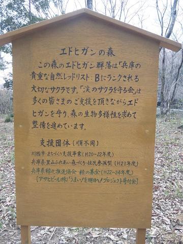 川西桜情報 エドヒガン看板.JPG