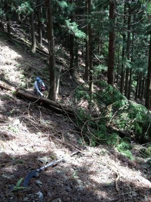 遠阪アサヒの森づくり 山道10.jpg